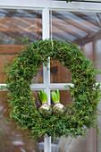 Wreath of juniper with hyacinth bulbs on glass door