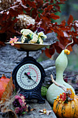Autumn arrangement of various squashes and scales