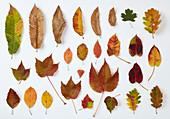 Multi-coloured autumn leaves on white surface