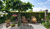 Deck chairs on a wooden deck by the hedge, elm for shade and hydrangeas, pot with geranium, lavender in gravel