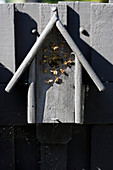 Wasps nesting in bird nesting box