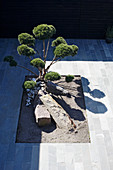 View down onto cloud-pruned tree in courtyard