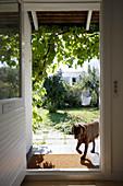View of dog on veranda