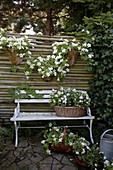 White petunias in wall-mounted planters on screen