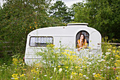 Young woman looking out of caravan in idyllic meadow