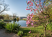 Flowering magnolia tree and Yucca in front of a swimming pond