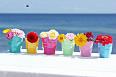 Colourful cups of flowers