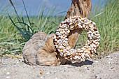 Shell wreath on the beach
