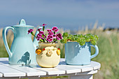 Carnations and succulents in containers and teapots on the beach