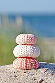Sea urchin shells in the sand