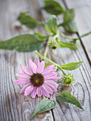 A pink echinacea flower on a wooden durface