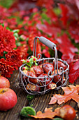 Basket of sweet chestnuts surrounded by chrysanthemums and apples