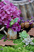 Mallows in tiny watering can, succulents and hydrangea