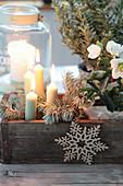 Weihnachtliche Dekoration mit Christrose und Windlicht in alter Holzform