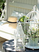Wire vine in a decorative cage and houseleek in a pot as a decorative idea