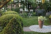 Sitzplatz im Garten mit weißen Rosen und formgeschnittenem Buchs