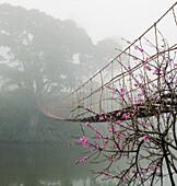 Footbridge Suspended Over a Foggy River, Lao Cai, Vietnam