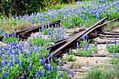 Flowers Overgrowing Unused Railroad Tracks, Texas Hill Country, USA