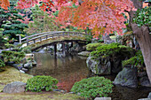 Sento Imperial palace gardens, Lake and wooden bridge. Acer trees in autumn colour.