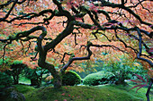 The Japanese Garden in Portland is a 5.5 acre garden and retreat. Said to be one of the most authentic Japanese Garden's outside of Japan, the rolling terrain and water features symbolize both peace and strength. Traditional hard landscaping designs, wate