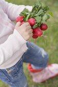 Kind hält Radieschen im Garten