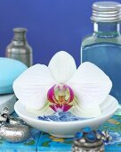 White orchid in dish, jewellery and beauty products