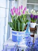 Tulips in flowerpot on a balcony