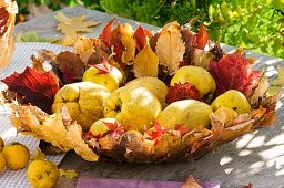 Quinces in bowl made of autumn leaves