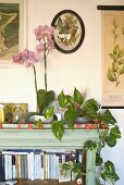 Top corner of a bookshelf with a string of red light and house plants next to an orchid in a pot