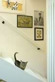 A cat on a flight of white, wooden stairs and pictures hanging on the wall