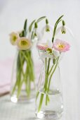 Bellis and snowdrops in glasses