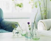 Various glass vases with flowers and grasses