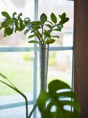 Leafy plant in a narrow metal vase in front of a window