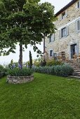 A tree in a round flowerbed with a stone wall and a country home with a natural stone facade