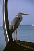 At the stern, in front of the curved keel, a gray heron stands poised