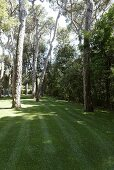 Freshly mowed lawn in a garden with old trees