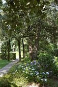 Gravel path in a garden with blooming plants and trees