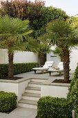 Relaxation on an elegant terrace with palms