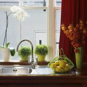A stainless steel sink with vintage taps and pots of herbs on the window sill