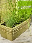 Glazed ceramic window box with grasses