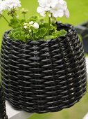 Geranium in a pot made of shiny, black rattan