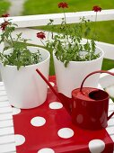 Red, metal watering can and white plant pots on a fed table runner with dots