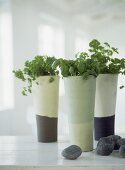 Herbs in modern ceramic vases on white painted work top
