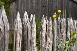A weathered garden fence