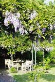Seating area under wisteria in garden