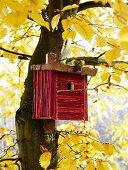 DIY nesting box in tree