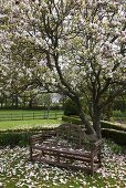 A flowering magnolia tree in a garden