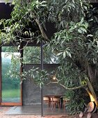 Tree in front of terrace of contemporary house with traditional wooden chairs