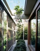 Planting area between wicker sun screens and wide sliding doors in an English house