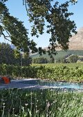 Hedge and flower beds framing modern pool with simple outdoor shower and view of mountainous landscape